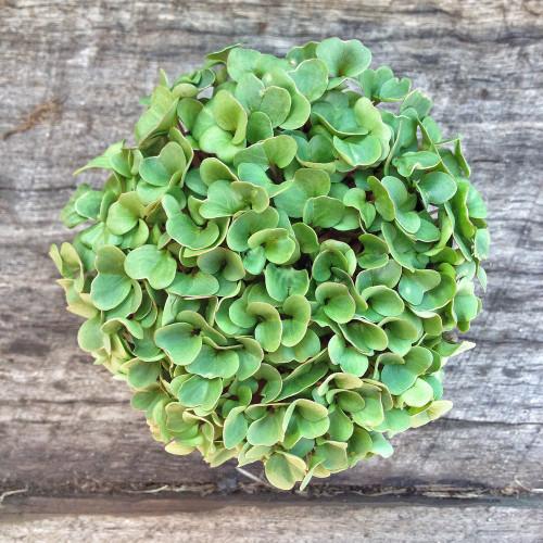 Microgreen Mix Seeds, 5g