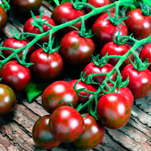Tomato 'Tigrino' (Lycopersicon Esculentum) Indeterminate Vegetable Heirloom, 40-50 Seeds