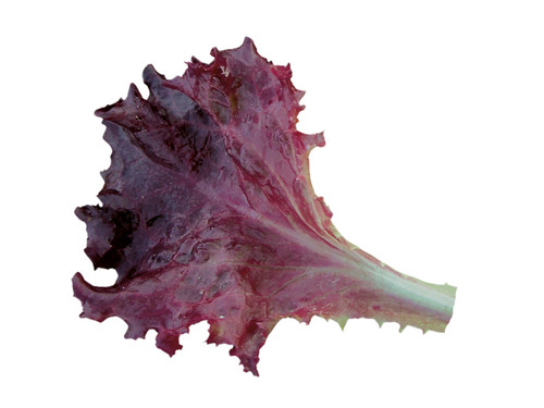 Lettuce 'Redlo' (Lactuca Sativa) Baby Leaf Vegetable Heirloom, 300-350 Seeds