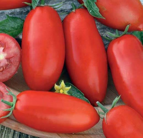Tomato 'Zyska' (Lycopersicon Esculentum) Determinate Vegetable Heirloom, 20-30 Seeds