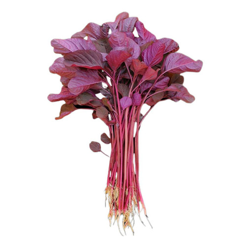 Amaranth Red Leaf (Amaranthus Tricolor) Vegetable Heirloom, 2g (0.07oz) Seeds