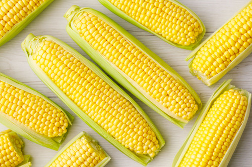 Sugar Corn 'Tasty Sweet H' (Zea Mays) Vegetable Hybrid, 35-49 Seeds