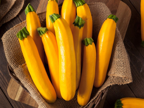 Zucchini 'Goldena' (Cucurbita pepo L.) Heirloom, 12-16 Seeds
