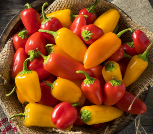 Sweet Bell Pepper 'Lunch Box Mix H' (Capsicum annuum) 12 Seeds
