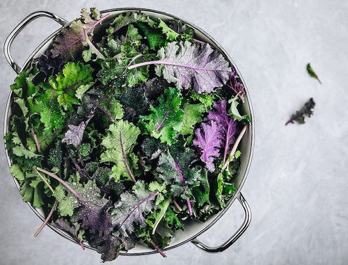 Kale Curly 'Kapral & Rednex'  Mix (Brassica Oleracea L.) Heirloom, 4m Tape