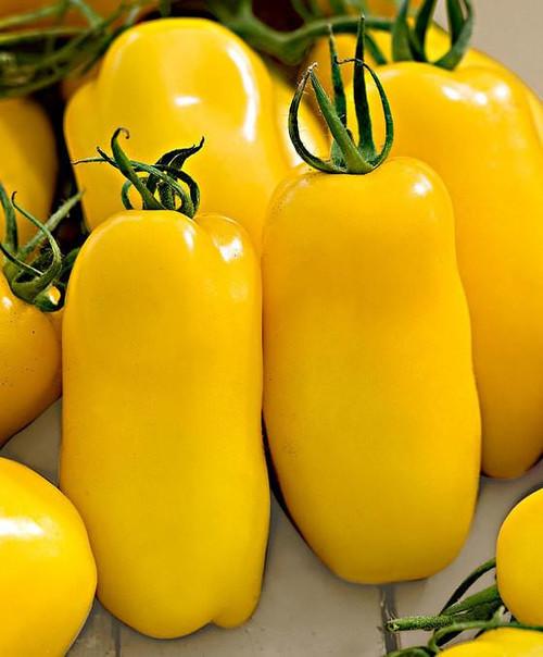 Tomato 'Banana Legs' (Solanum Lycopersicum) Semi-Determinate Vegetable Heirloom, 50-80 Seeds
