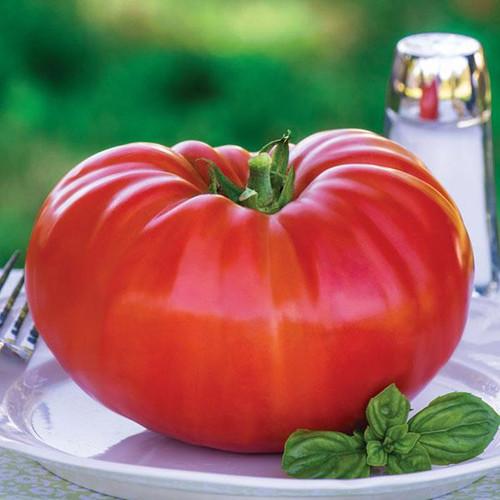Tomato 'Buffalo Steak' (Lycopersicon Esculentum) Indeterminate Vegetable Heirloom, 10 Seeds