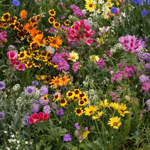 Japanese Flower Mix 4800 Seeds