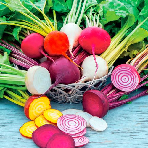 Beetroot Mix (Beta Vulgaris L.) Colorful Vegetable Heirloom, 300-390 Seeds