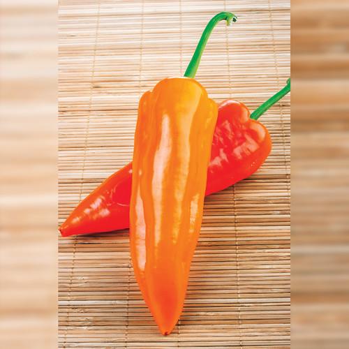 Pepper Sweet 'Timia' (Capsicum Annuum) Vegetable Heirloom, 12-16 Seeds