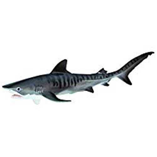TIGER SHARK W2
