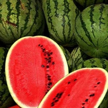 Watermelon TFA **OUT OF STOCK**