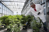 Pennsylvania Has a Medical Marijuana Drought, Here's Why...