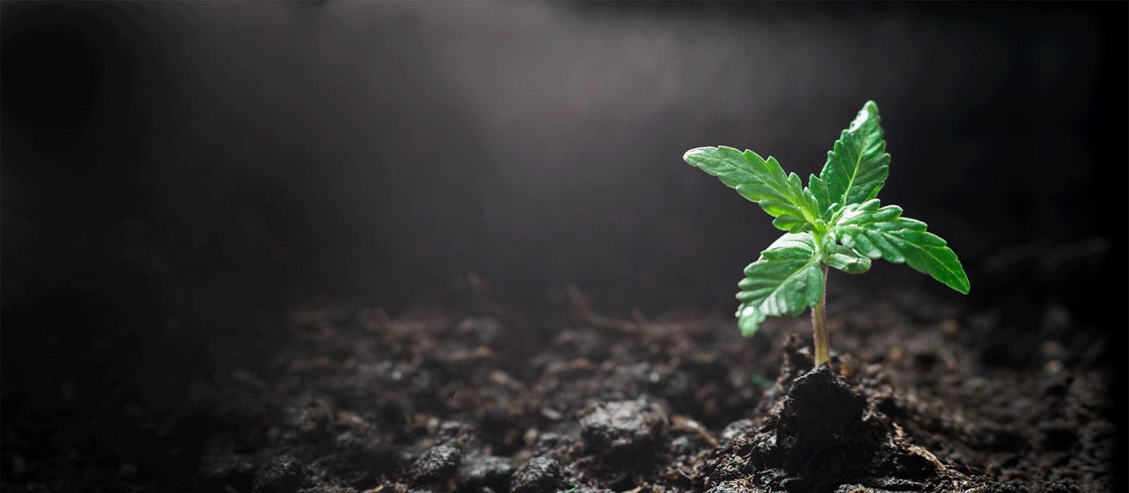 qib-plant-1600px.jpg