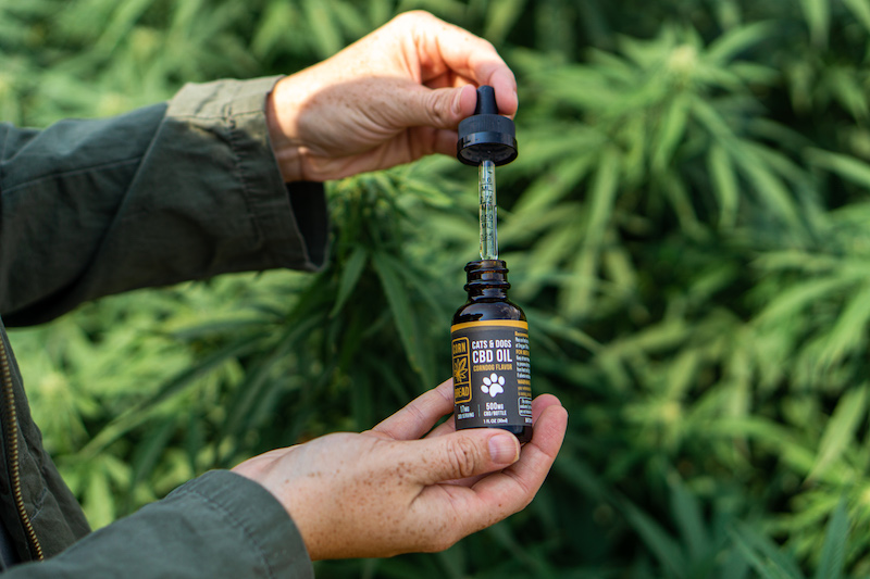 A dog owner holds a dose of Cornbread Hemp USDA organic CBD oil for cats and dogs