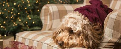 Our Dog Friendly Tips For The Christmas Season