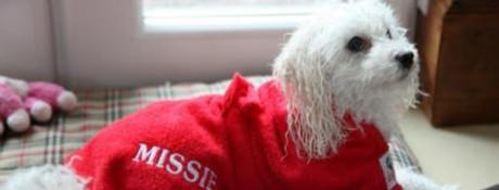 Bonfire Night Tips: Dogrobes as a Dog Comfort Blanket