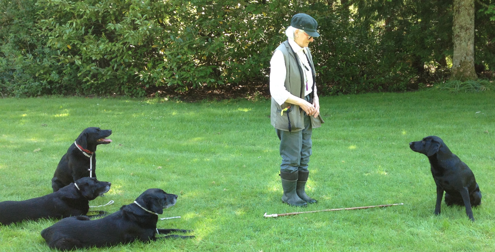 Ann Playle surrounded by black labs, working her beloved dogs