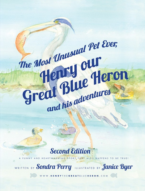 The Most Unusual Pet Ever  Henry our Great Blue Heron and his adventures