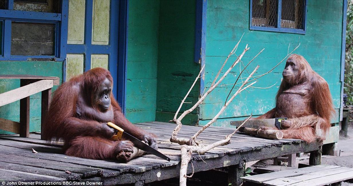 Clean Air, Orangutans and The Farm Mechanic
