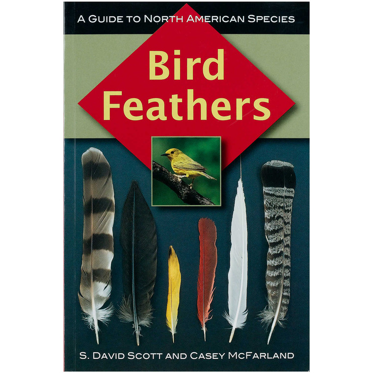 Bird Feathers Guide to North American Species