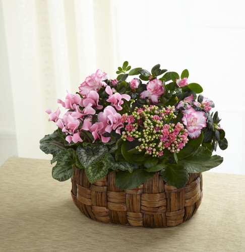 Plant basket Assortment Florist Long Island NY
