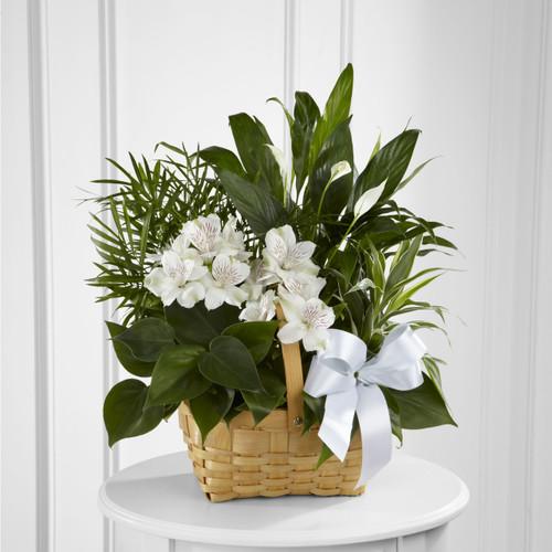 Peace & Serenity Dishgarden Long Island Florist