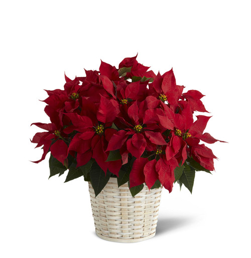 Red Poinsettia Basket (Large) Long Island Flower Delivery