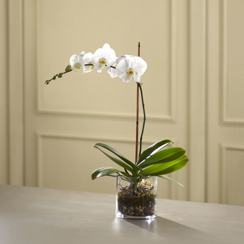The White Orchid Planter Long Island Florist