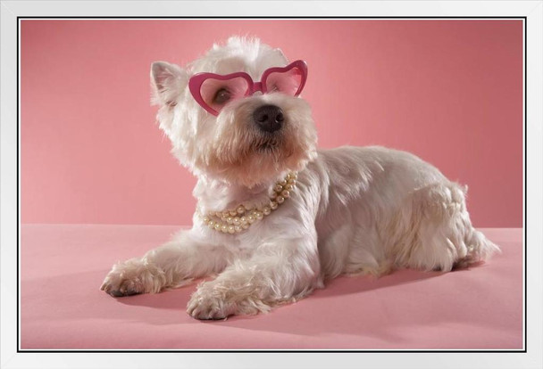 Cute Fashionable West Highland Terrier Wearing Necklace and Glasses Photo Photograph White Wood Framed Poster 20x14