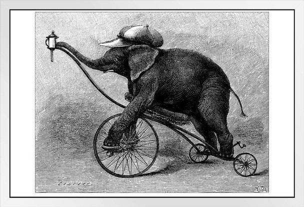 Antique Illustration of Circus Elephant Photo Photograph White Wood Framed Poster 20x14