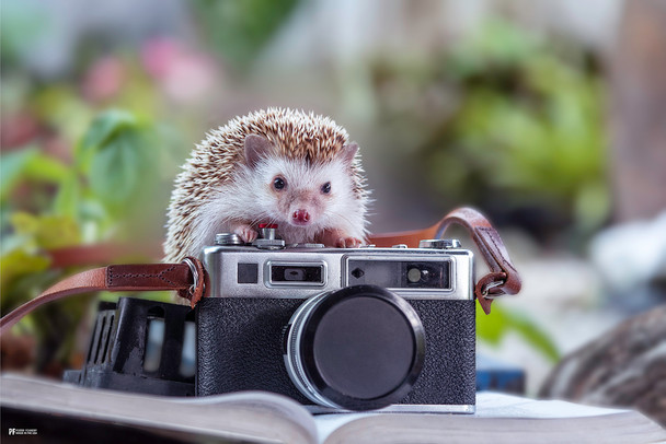 Hedgehog With Camera Cute Poster