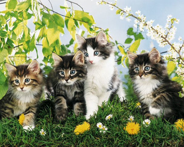 Cute Cats Four Kittens Art Poster 16x20 Inch
