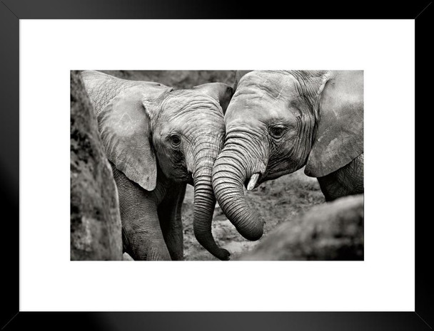 Elephant Mother And Calf Wildlife Animals Nurturing Love Matted Framed Wall Art Print 26x20 inch