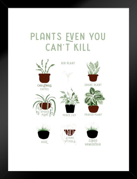 Plants Even You cant Kill Succulents Funny Matted Framed Wall Art Print 20x26  inch