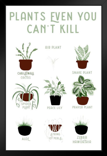 Plants Even You cant Kill Succulents Funny Framed Poster 14x20  inch