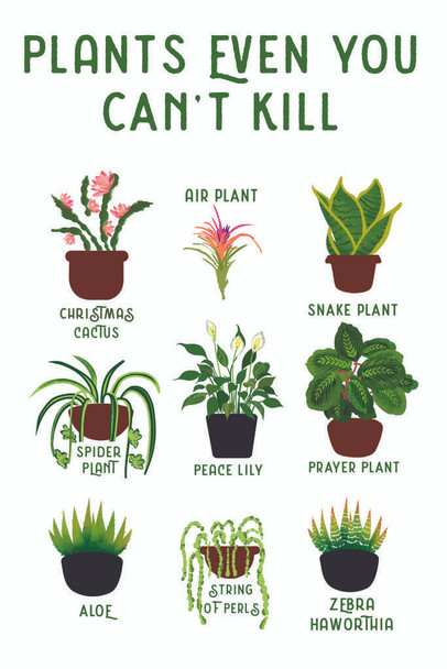 Laminated Plants Even You cant Kill Succulents Funny Sign Poster 12x18 Inch