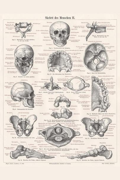 Skeleton of Man 1895 German Illustration Educational Chart Cubicle Locker Mini Art Poster 8x12