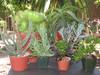 Drought Tolerant Landscape 7 Plants