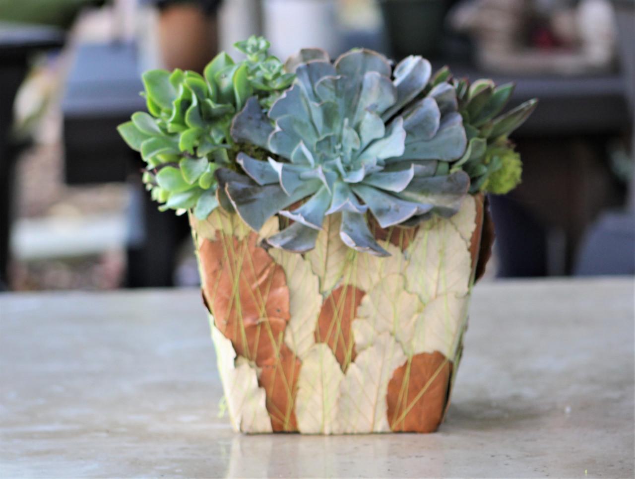 Succulent Arrangement Live Succulents Decorated Leaf Container