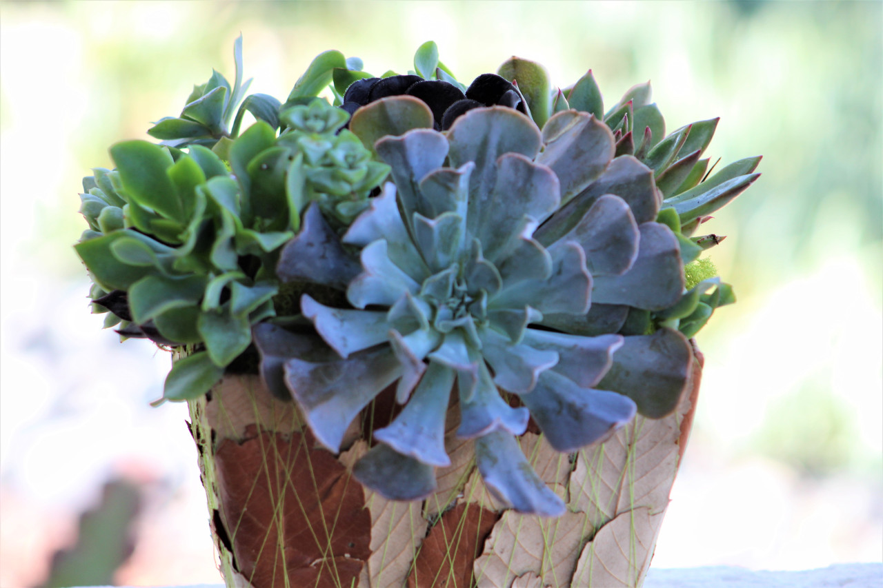 Succulent Arrangement Live Succulents Decorated Leaf Container Planter Holiday Gift Tabletop Decor Housewarming Gift