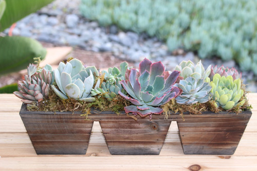 Succulent Arrangement, Live succulents wood container Planter, Holiday Gift, Tabletop decor, Housewarming Gift