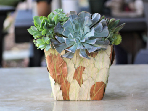 Succulent Arrangement, Live succulents decorated leaf container Planter, Holiday Gift, Tabletop decor, Housewarming Gift