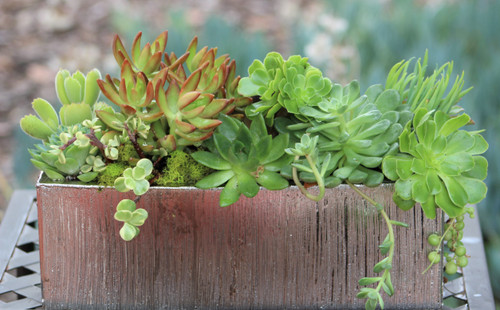 Succulent Arrangement, Live succulents in rectangular  Planter, Holiday Gift, Tabletop decor, Housewarming gift