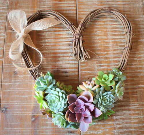 Valentine living succulent heart wreath