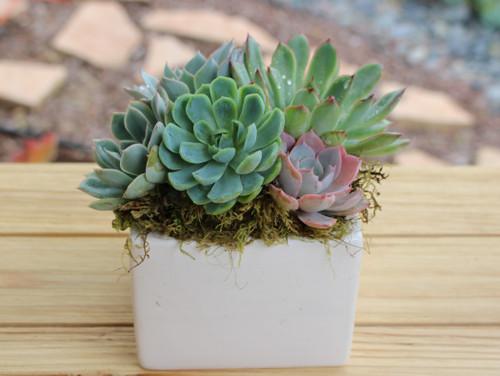 white ceramic pot with succulents