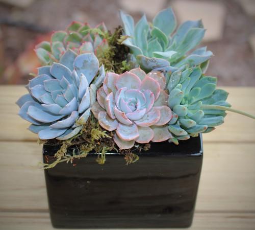 Black ceramic pot with succulents