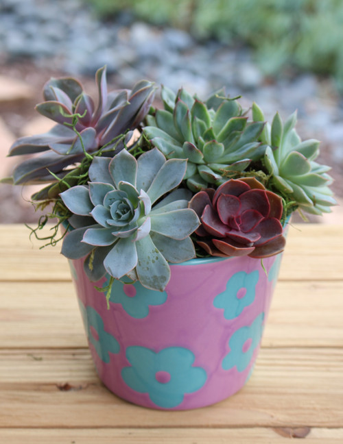 ceramic pot with succulents