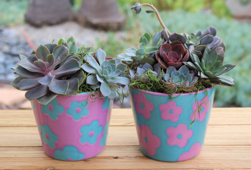set of two ceramic flower planters with succulent rosettes