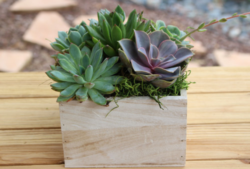 wash wood container with succulent rosettes